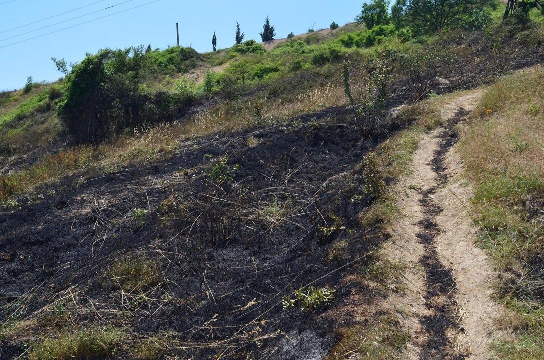 В Балаклаве из-за сухостоя могли сгореть жилые дома
