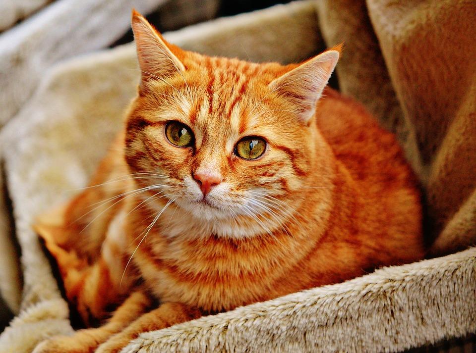 Названы самые частые болезни домашних кошек
