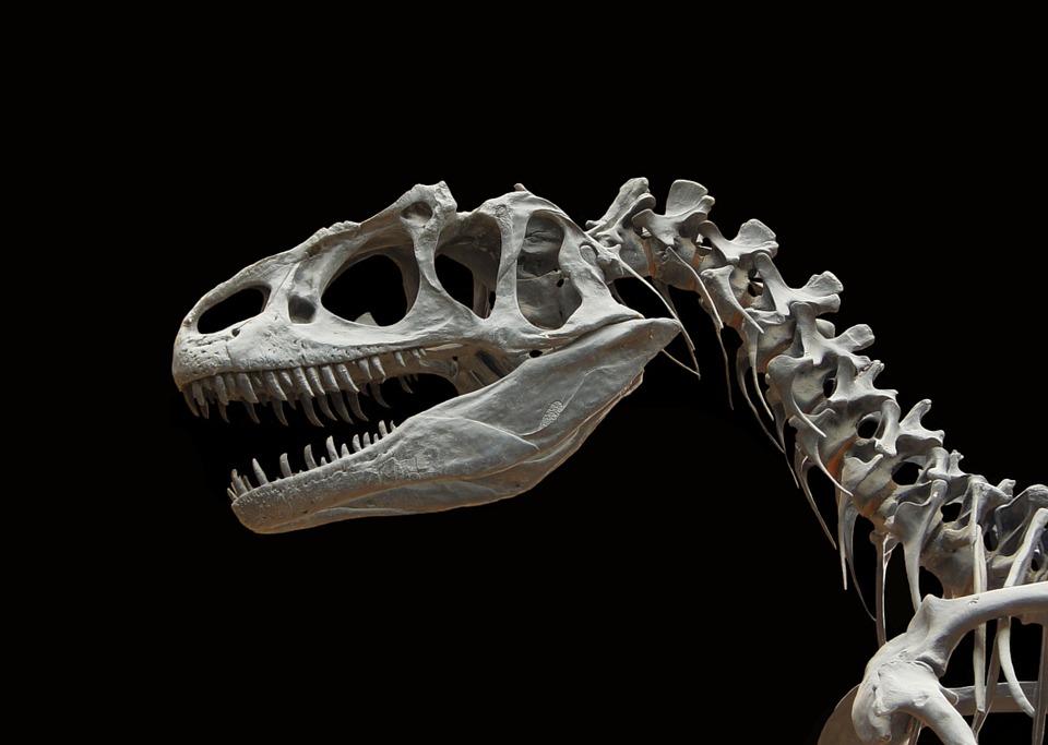 В Китае обнаружены следы динозавра возрастом в 100 миллионов лет