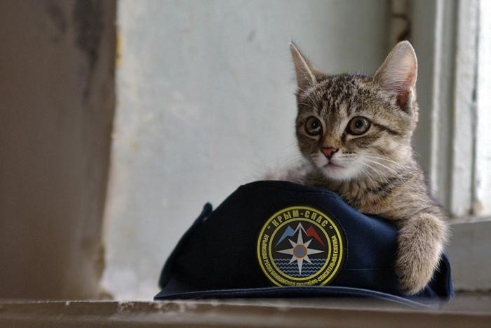 Крымские спасатели оказали помощь попавшему в беду коту