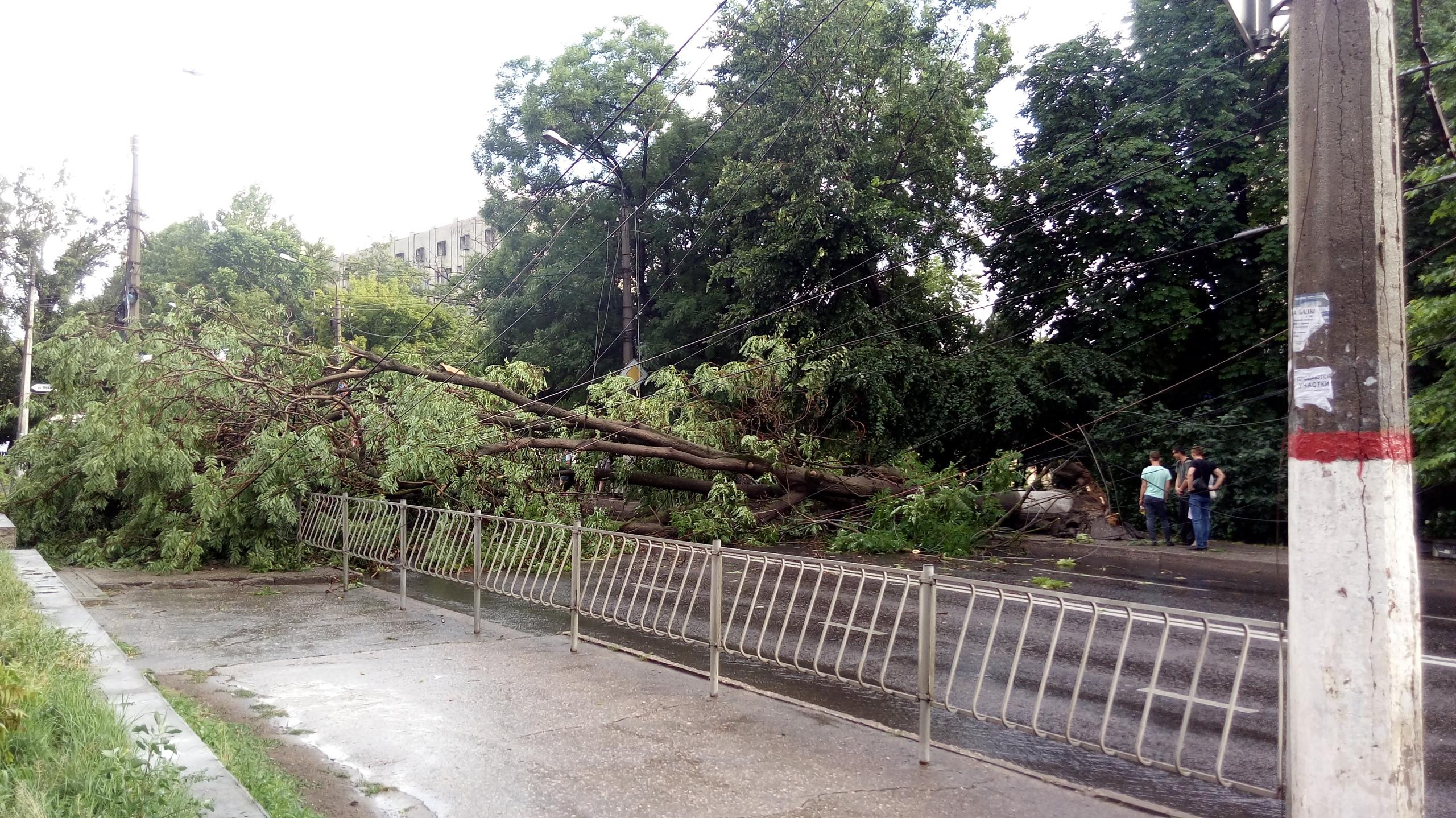 Непогода в Симферополе: деревья падают на машины и рвут линии электропередач