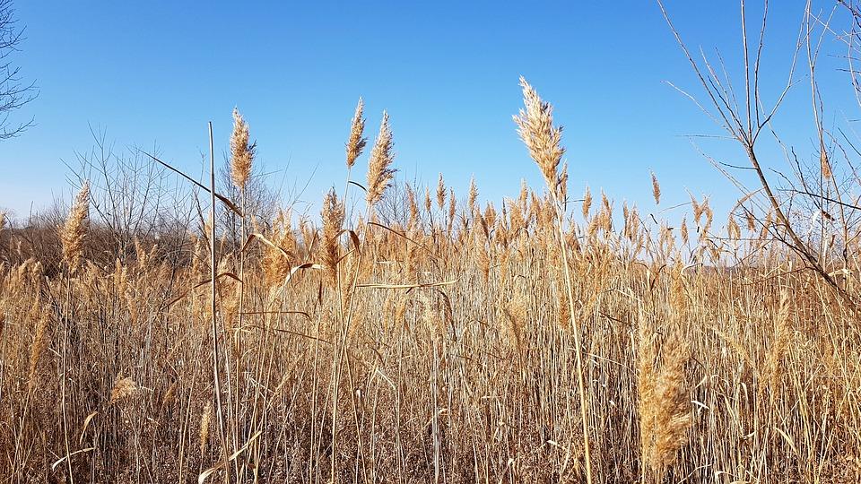 В России предложили изымать земли за мусор и нескошенную траву