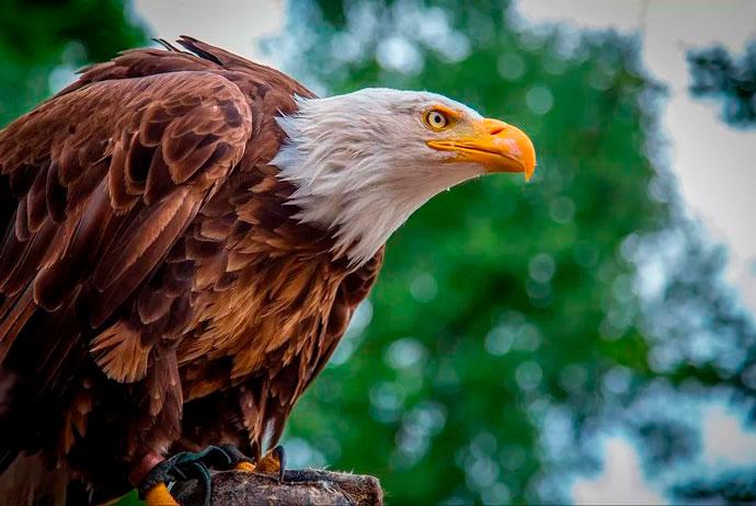 В Крыму у фотографа изъяли краснокнижную птицу
