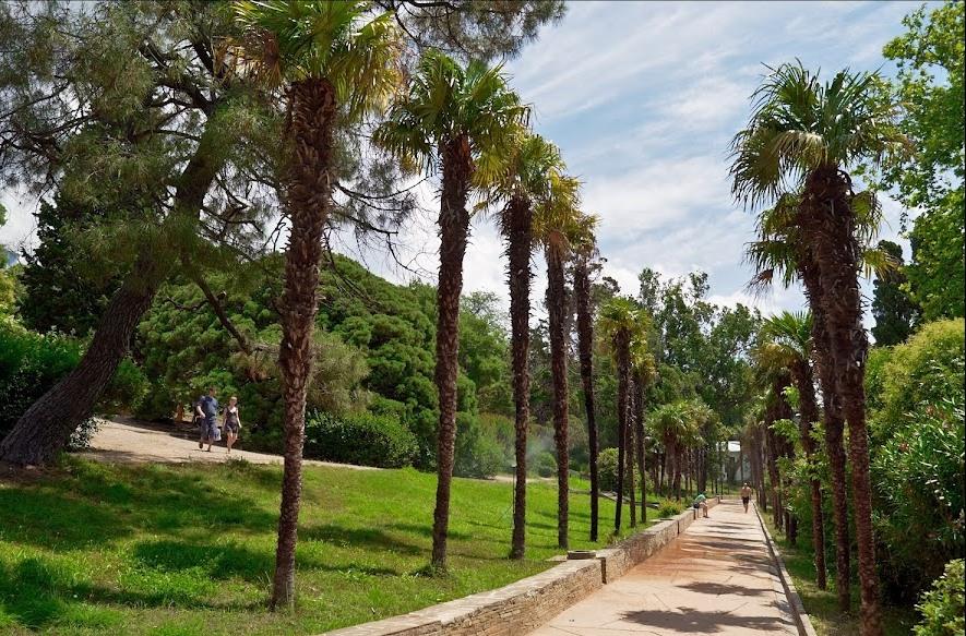 Демонтируют и сжигают: парк Воронцовского дворца лишился 70% пальм