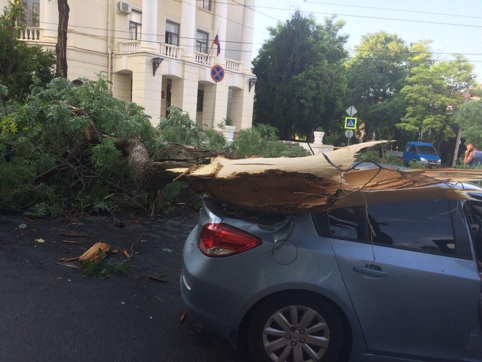 В Севастополе деревья падают на автомобили