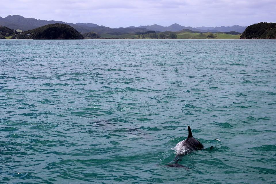 Ученые засняли, как в Крыму мама-дельфин горюет по погибшему малышу
