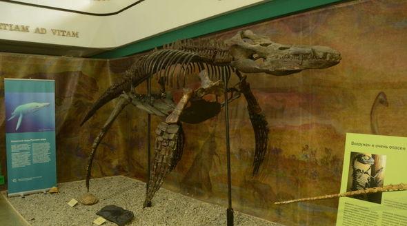 Никитский ботсад впервые покажет посетителям скелет плиозавра