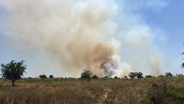 В Севастополе выгорело 12 гектаров виноградников
