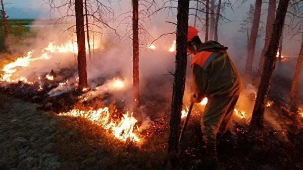 Эксперты предсказывают глобальную экологическую катастрофу из-за лесных пожаров в Сибири