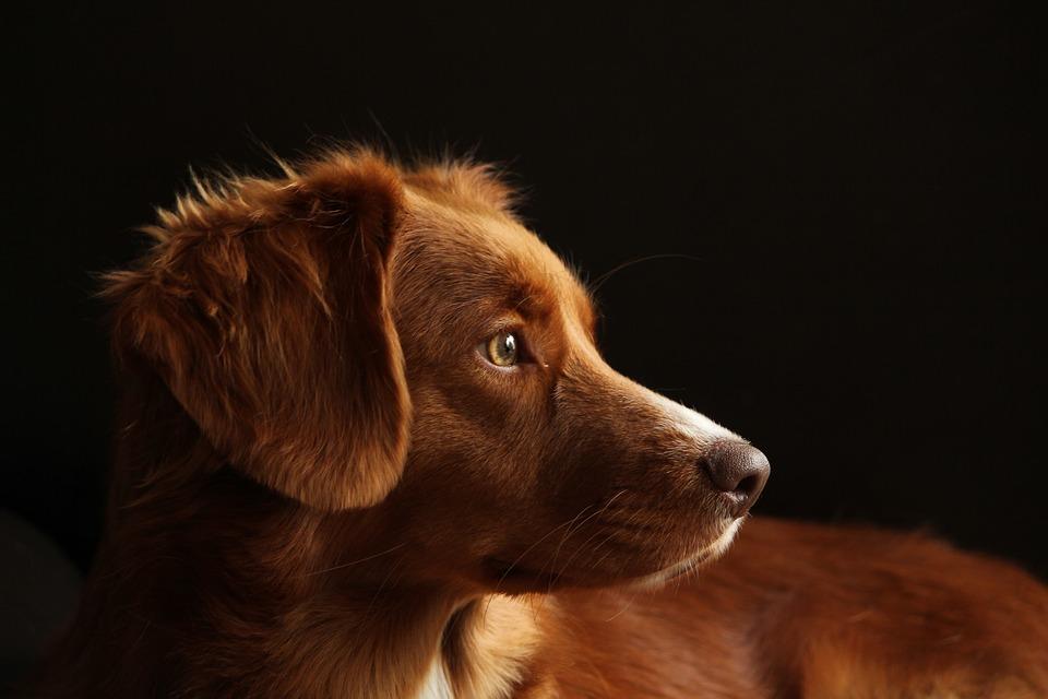 В крымском поселке массово отравили собак