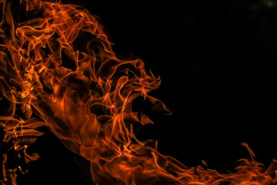 Соцсети: в Ялте две девушки заживо сожгли кота