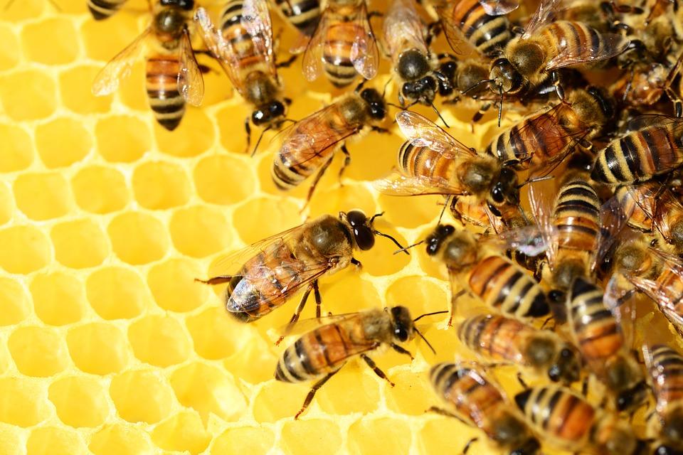 Немецкие ученые объявили о полном вымирании насекомых