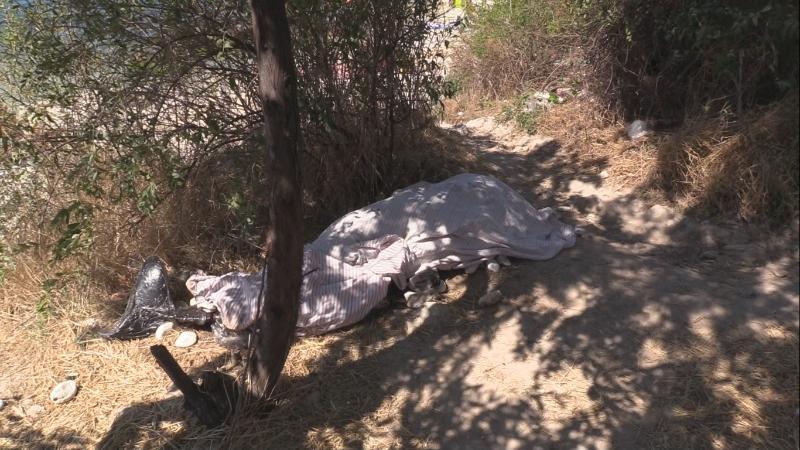 В Карантинной бухте на пляже несколько дней лежит мёртвый дельфин