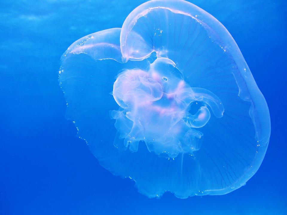 Эксперты рассказали, чем опасна встреча с медузами