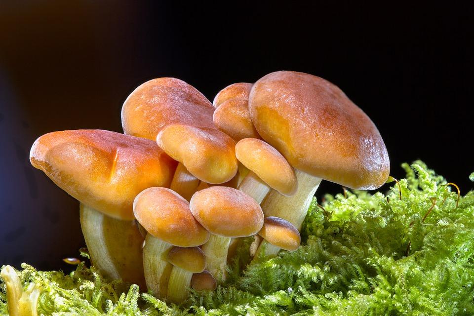 Врачи рассказали о пользе грибов