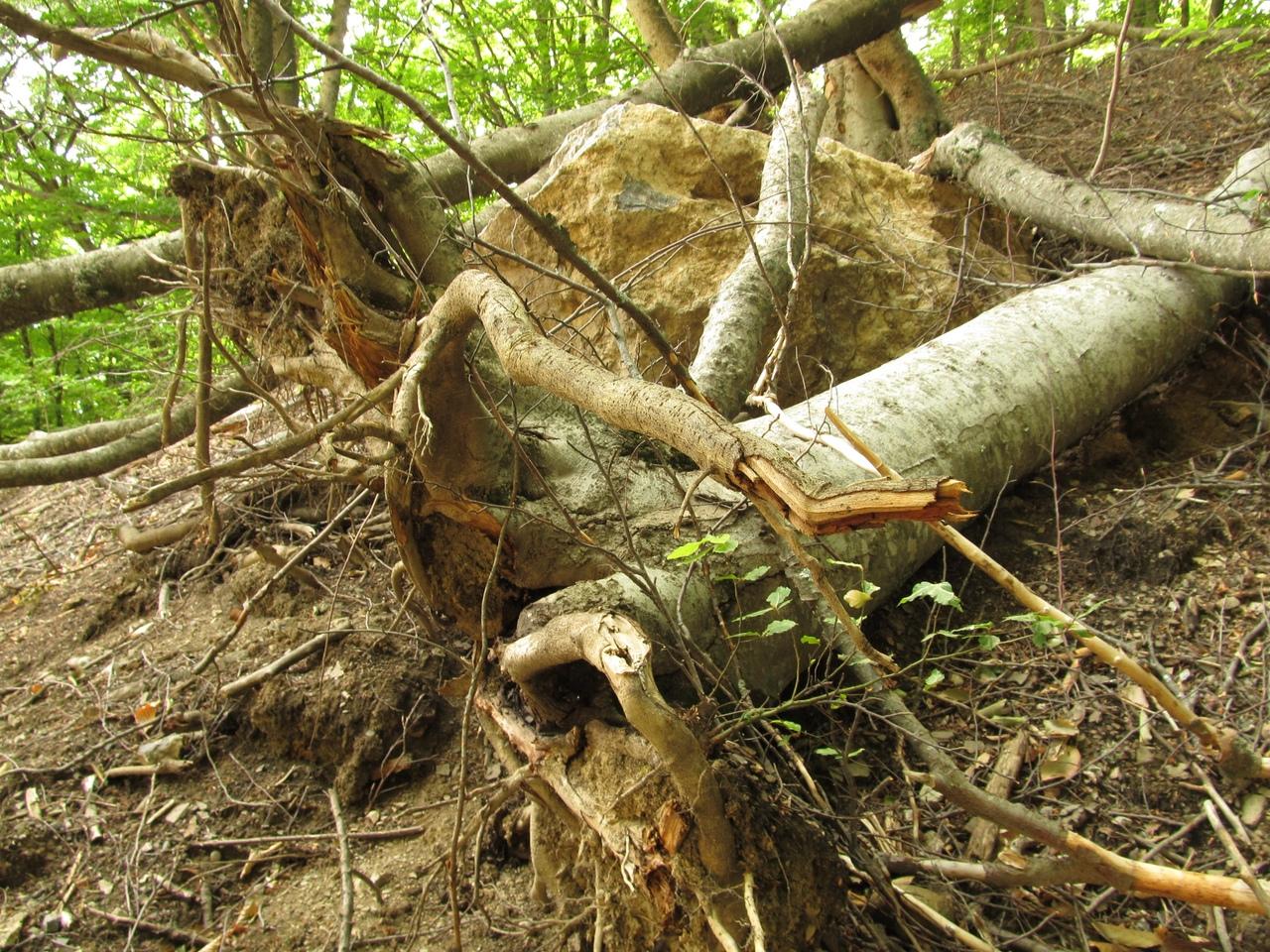 Каменные глыбы повалили лес: на горе Демерджи произошел крупнейший за 30 лет обвал