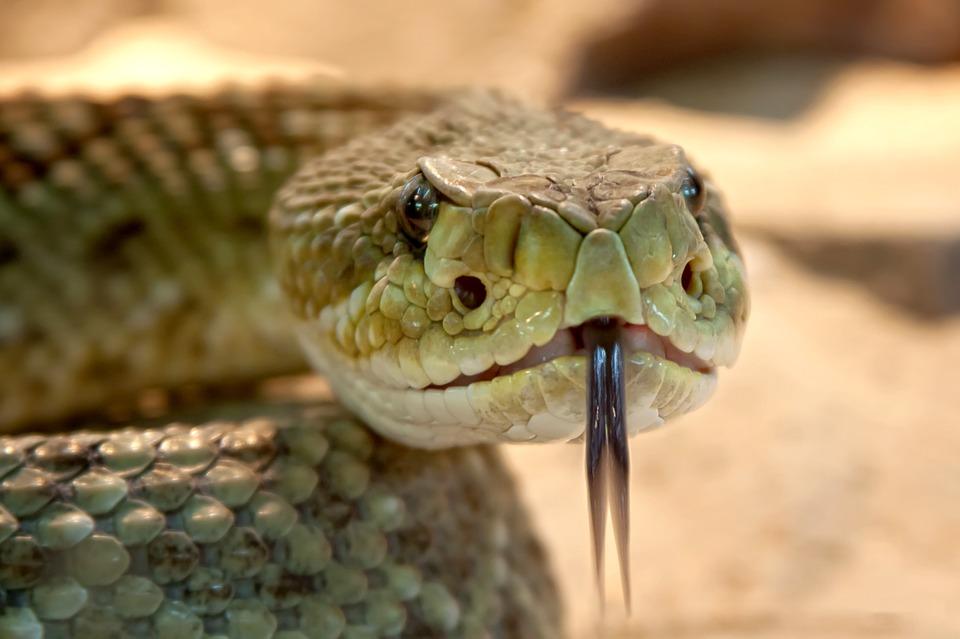 В Крыму участились случаи нападения змей на людей