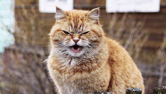 В Симферополе ввели карантин из-за бешенства кота