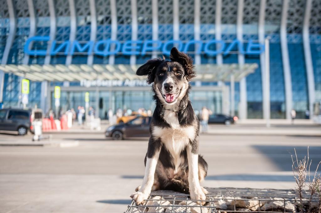 Талисман симферопольского аэропорта собака Алиса отметила первые сто дней на службе