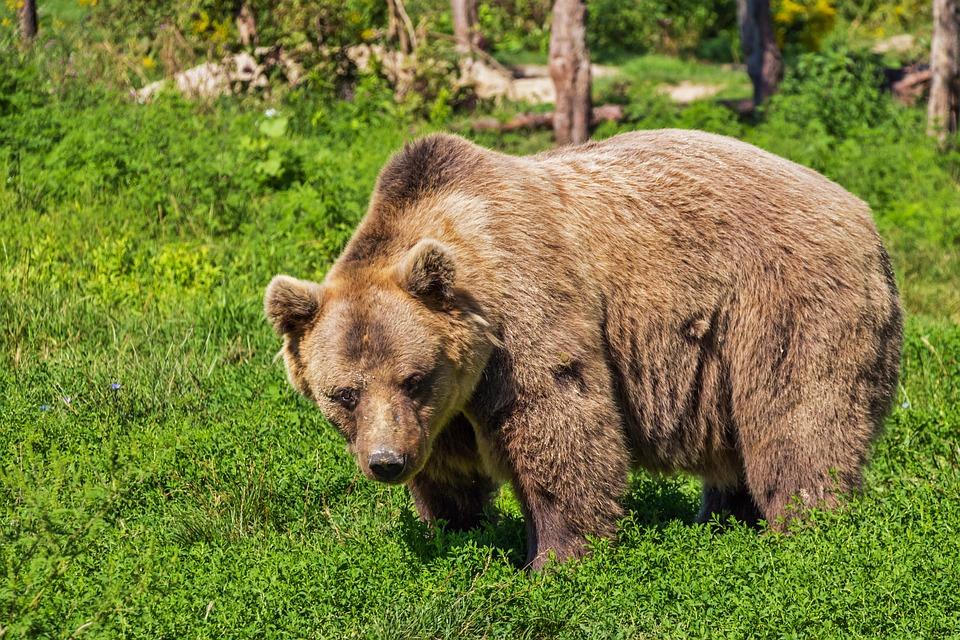 В тайге пенсионерка сутки стояла в воде и рычала, отпугивая медведя