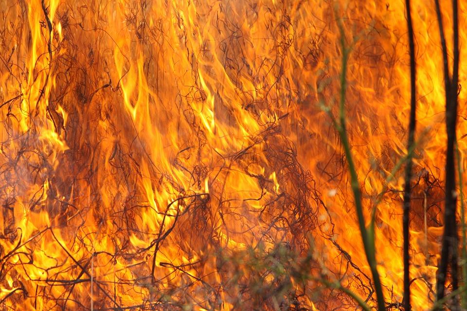 В Крыму выгорело 6 гектаров предгорной степи