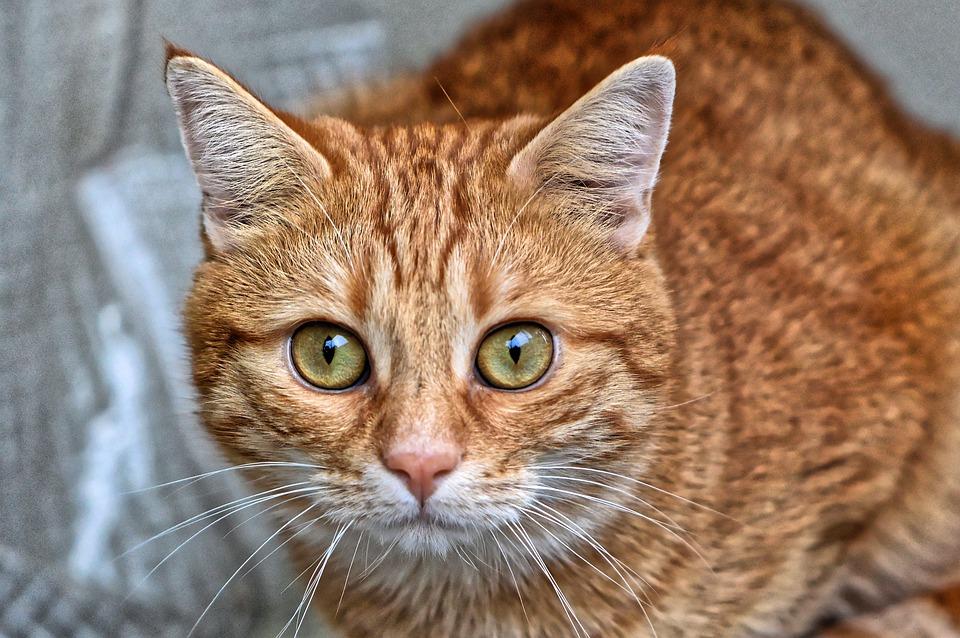 В Крыму участники фестиваля спасали забравшегося на 15-метровый арт-объект кота