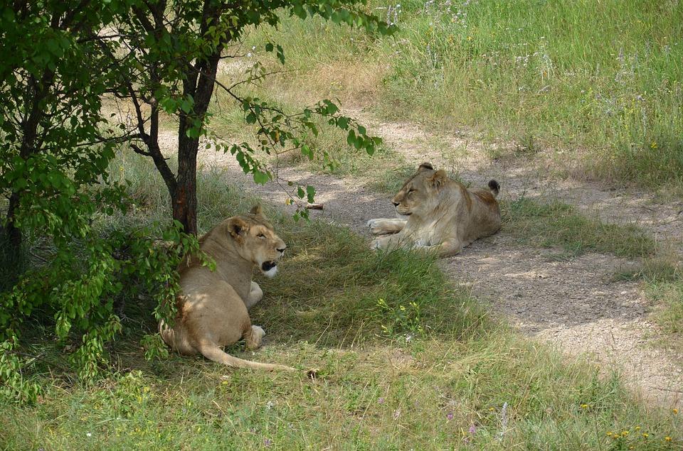 Крымский парк львов назван самым интересным в РФ для посещений с детьми