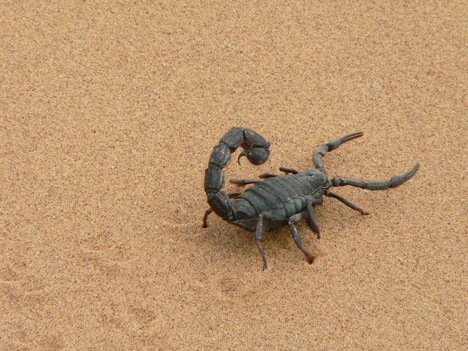 «Это Игорек!»: Пользователей соцсетей развеселило видео с ялтинским скорпионом