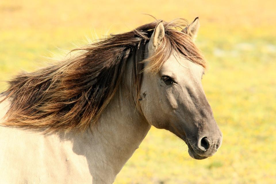 Крымские туристы жалуются на «коней», вымогающих деньги с отдыхающих