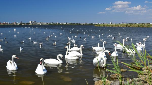 В Евпатории появится экскурсионный маршрут «Лебединое озеро»