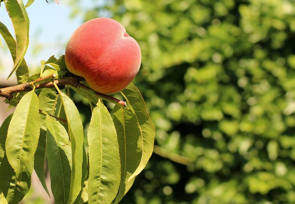 Крымчанка пошла в огород за персиками, а нашла труп мужчины, пропавшего год назад