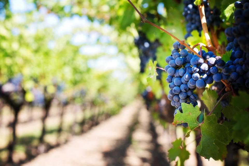 В севастопольских виноградниках нашли опасную мину