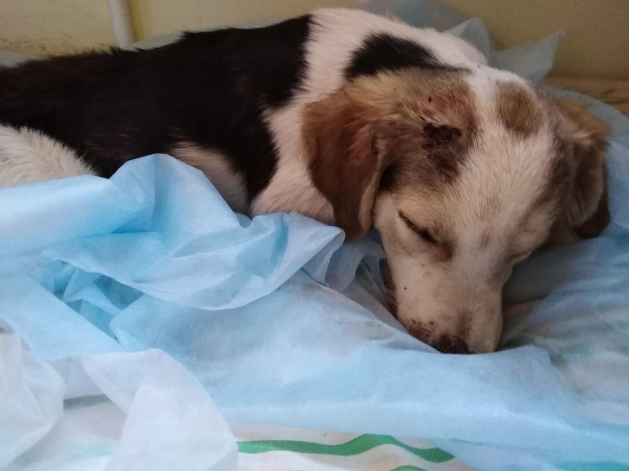 Кидал на асфальт и швырял через забор: в Крыму мужчина жестоко избил щенка