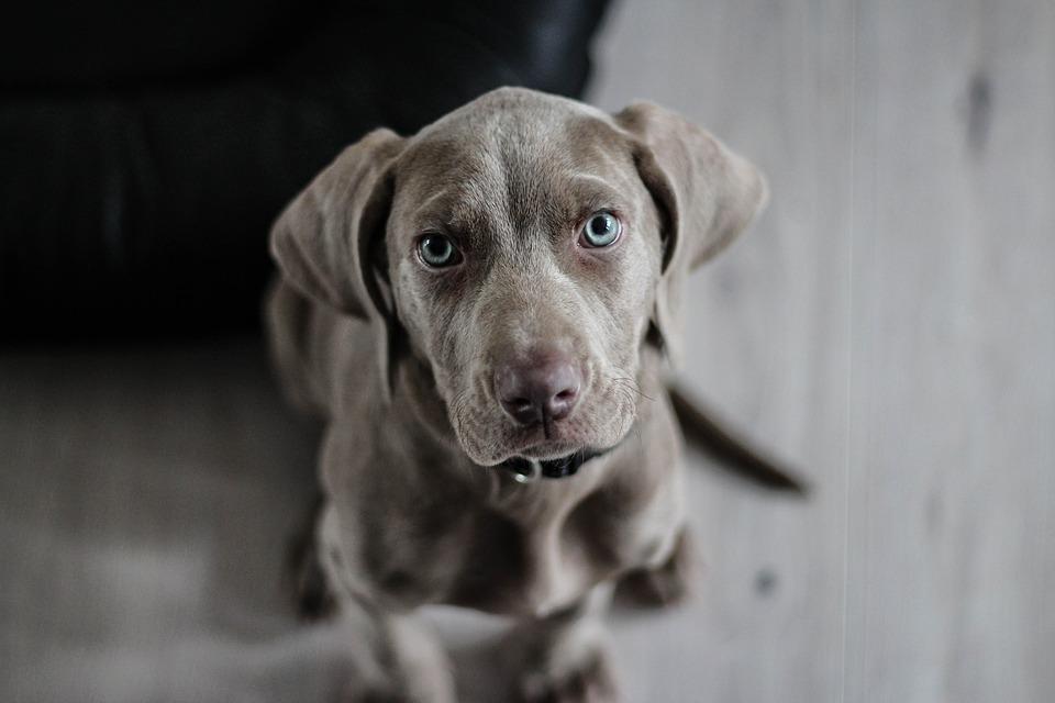 Кидал на асфальт и перебрасывал через забор: в Крыму жестоко избивали собаку