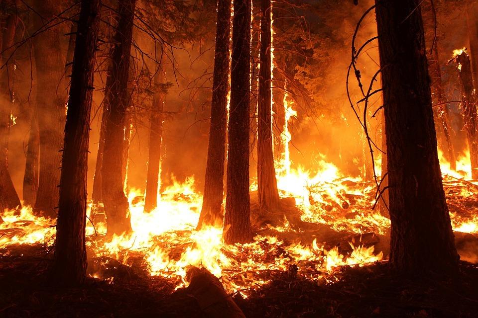 До +35 градусов: в Крыму объявлена высокая пожарная опасность