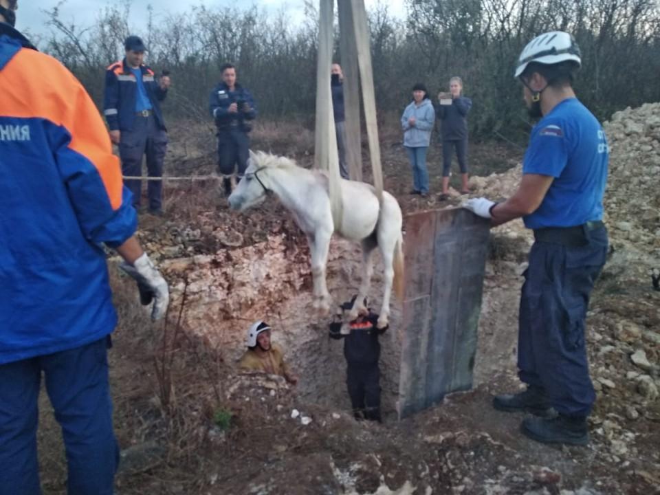 На Фиоленте успешно спасли двух пони