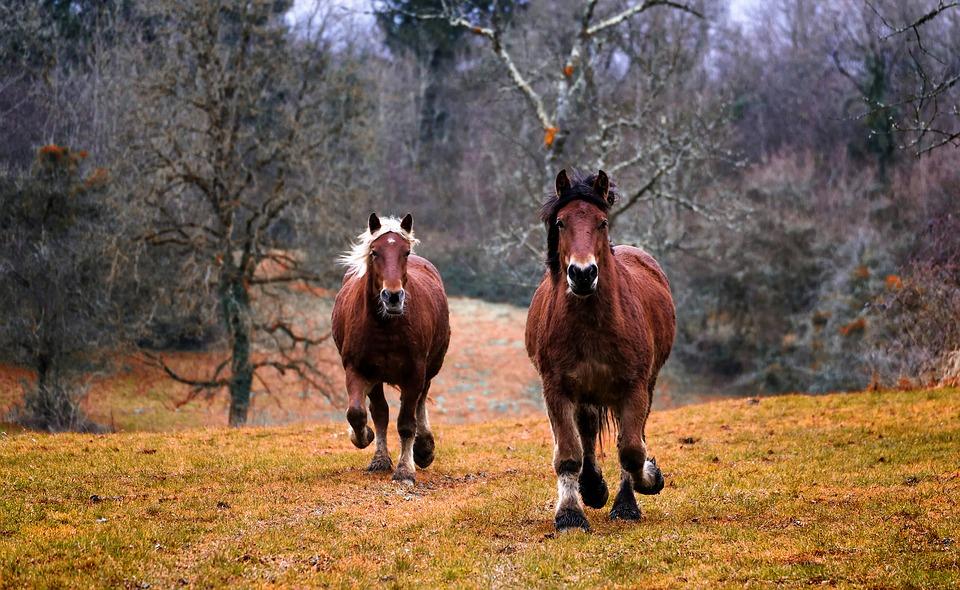 В Крыму лошадь едва не забила насмерть девочку