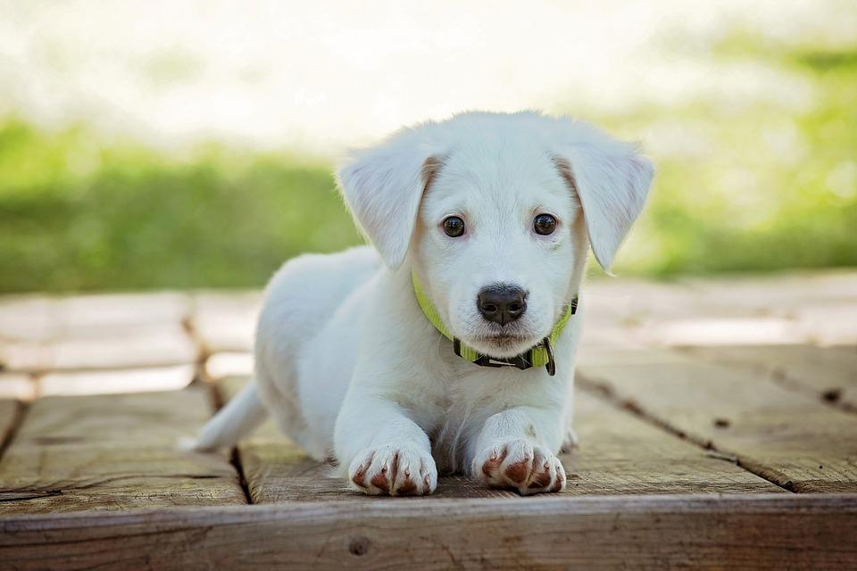 В Керчи жестоко убили собаку, ввинтив ей в голову шуруп
