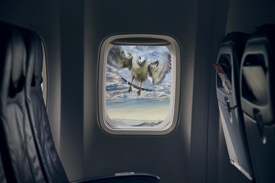 Аэропорт Симферополя должен выплатить авиакомпании 3 млн рублей из-за птицы