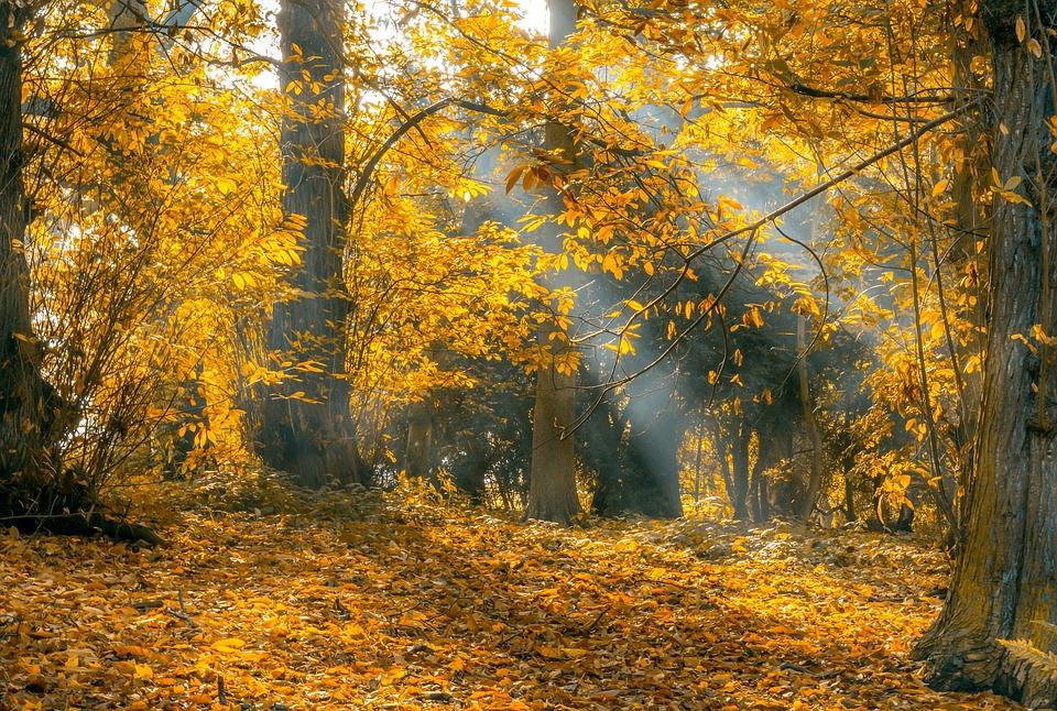 В Крыму сухо и до +25 (прогноз погоды на 17 – 19 октября)