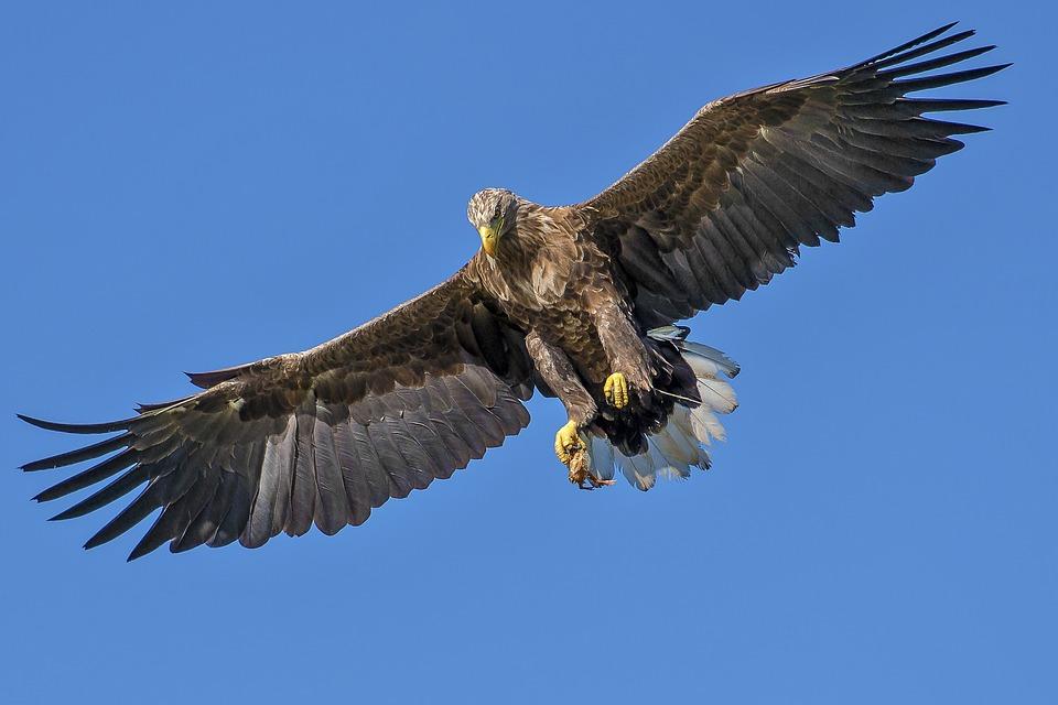 Быстрая птица разорила российских орнитологов из-за дорогого роуминга