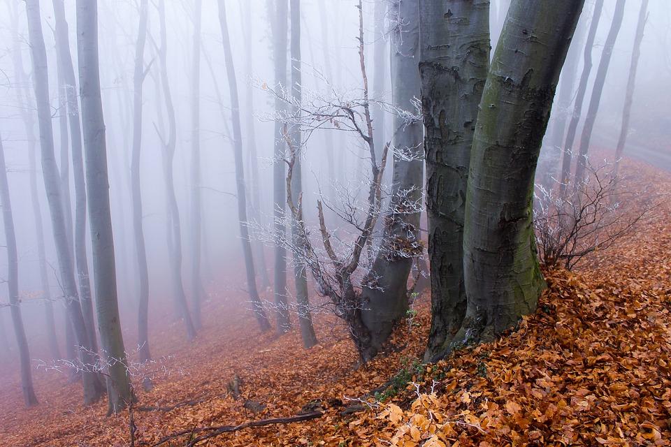 Ночные морозы и сильный ветер: прогноз погоды в Крыму на ближайшие дни