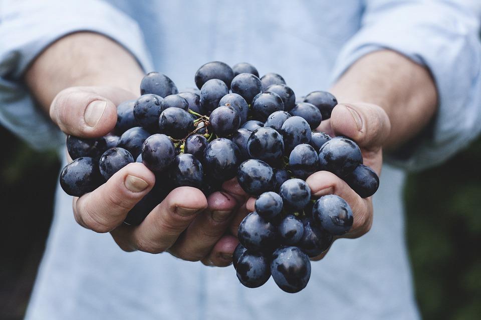 Ученые рассказали о полезных свойствах винограда