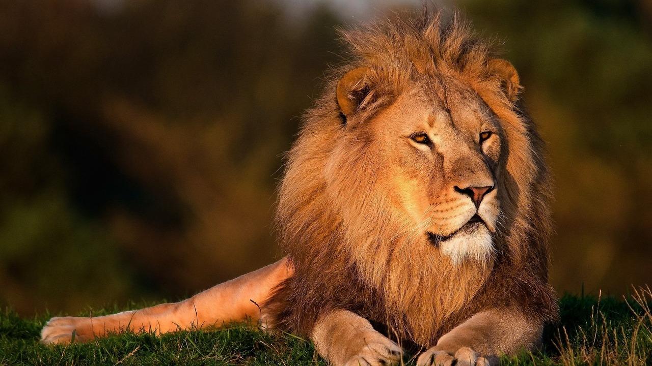 Владелец «Тайгана» пойдет под суд из-за укуса туристки львом