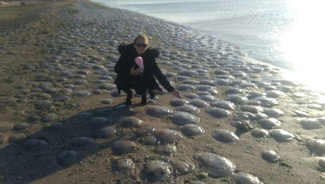 Тысячи медуз выбросило после шторма на берег Крыма