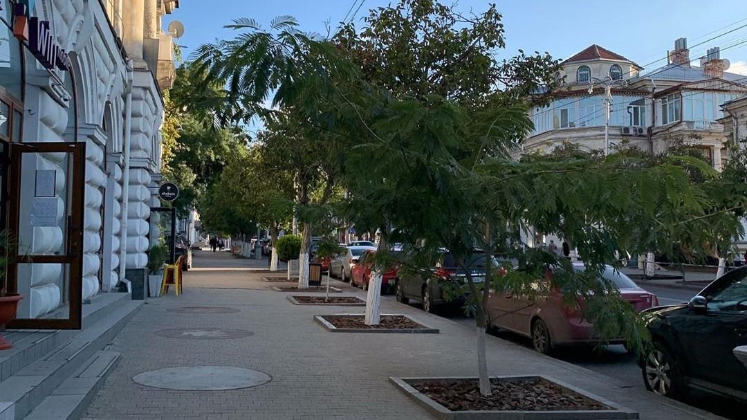 В Севастополе отказались от идеи высадить хвойные деревья на Большой Морской