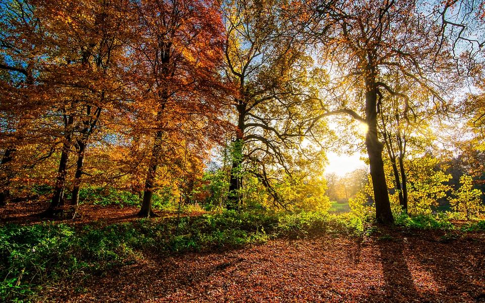 Теплый ноябрь: в Симферополе побит абсолютный температурный максимум