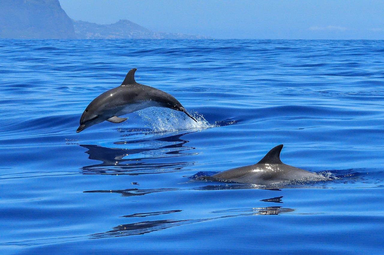 Ученые заявили о миграции дельфинов из Черного моря