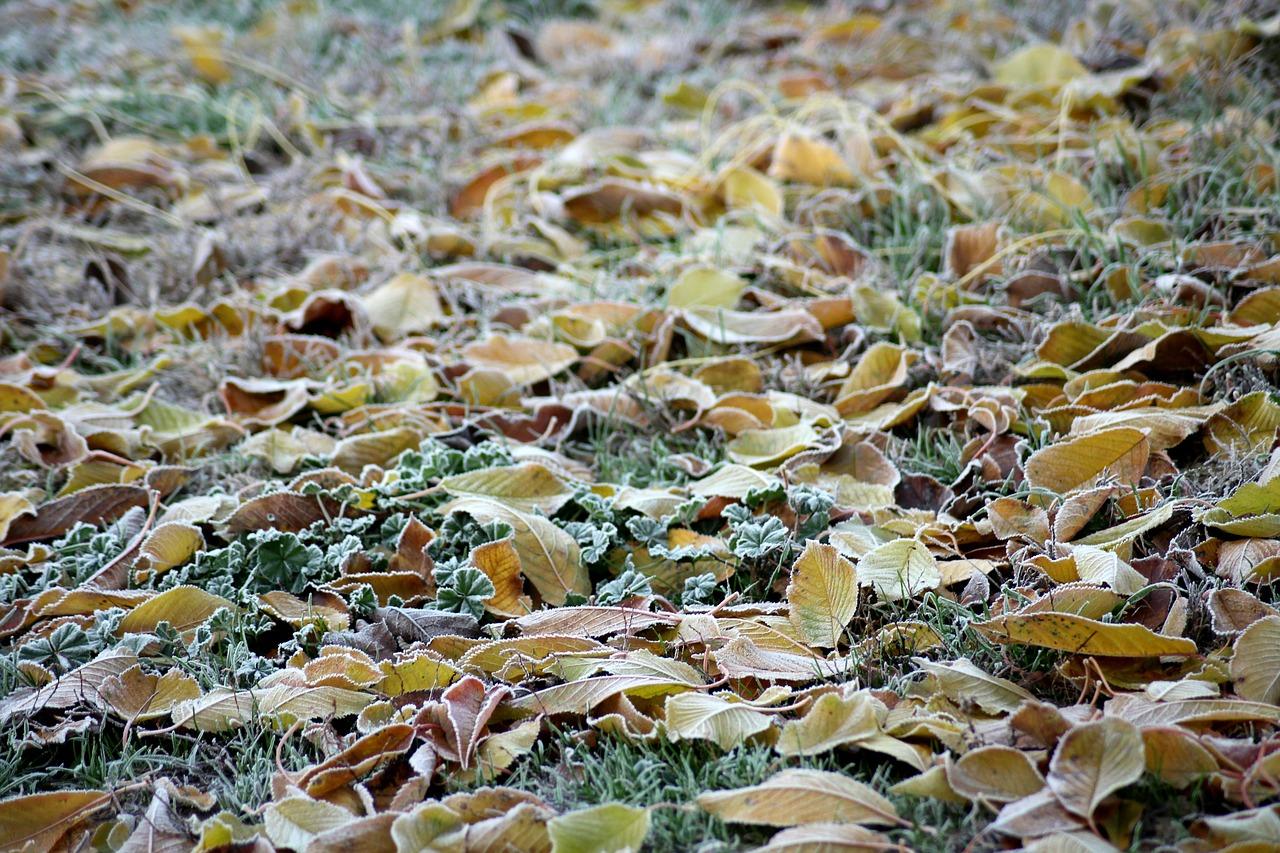 В Крыму постепенно холодает (прогноз погоды на 19 – 21 ноября)