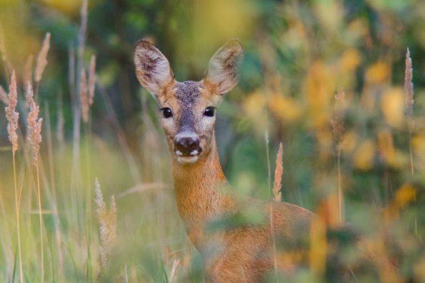 В севастопольском лесу браконьеры убили детеныша косули
